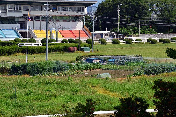 笠松競馬の畑