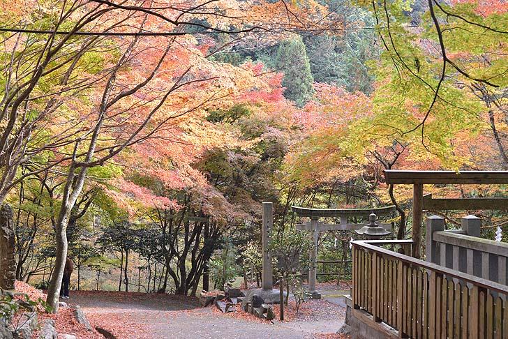 大矢田神社の参道