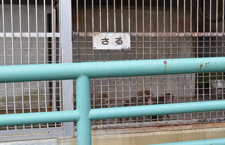 小倉公園のサル