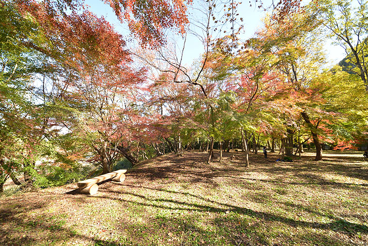 可児川下流域自然公園の紅葉