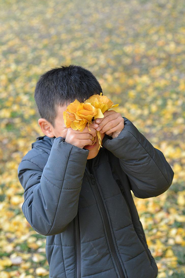 イチョウの葉で花を作る子供